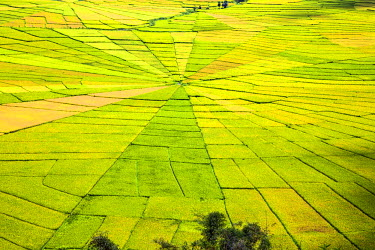 IDA0499 Indonesia, Flores Island, Cancar. The attractive Spider�s Web rice paddies near Ruteng.