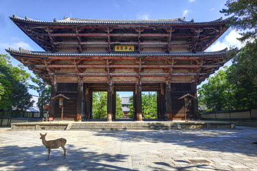 AS15BJY0033 Japan, Nara, Nara Park. Doe in front of Great South Gate to the Todai-ji Templ