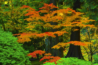 Autumn at Portland Japanese Garden, Portland, Oregon, USA.