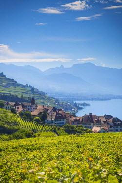 CH03701 Vineyards above Vevey, Lake Geneva, Vaud, Switzerland