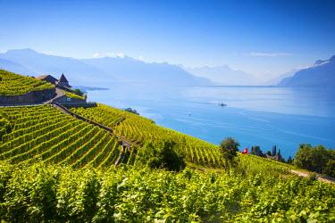CH03702 Vineyards above Vevey, Lake Geneva, Vaud, Switzerland