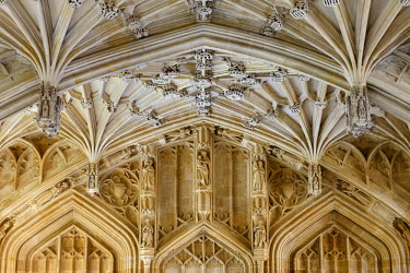 ENG11574AW Europe, United Kingom, England, Oxfordshire, Oxford, Divinity School
