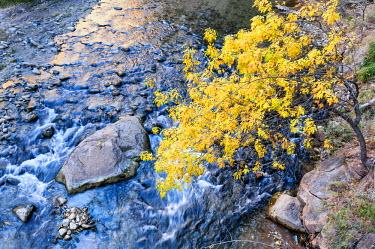 USA9352AW U.S.A., Utah, Zion National Park, Virgin River
