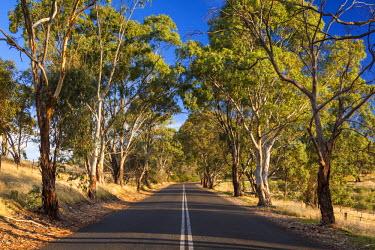 AS02135 Australia, South Australia, Barossa Valley, Tanunda, country road, Mengler's Hill