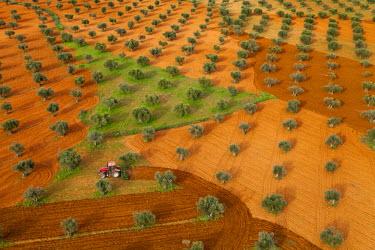 HMS0391384 Spain, Madrid region, Valdilecha, olive groves (aerial view)