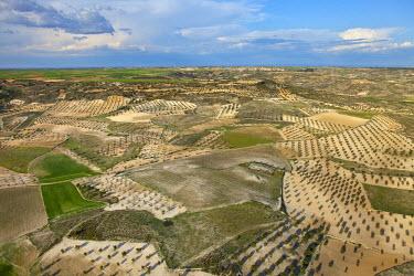 HMS0391448 Spain, Madrid region, Chinchon, olive groves forming geometric designs (aerial view)