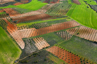 HMS0391455 Spain, Madrid region, Chinchon, olive groves forming geometric designs (aerial view)