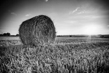 FR05588 France, Centre Region, Indre-et-Loire, Sainte Maure de Touraine, Straw Bale in field