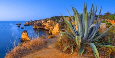 PT06164 Portugal, Algarve, Lagos, Dona Ana Beach (Praia Dona Ana), Agave plant