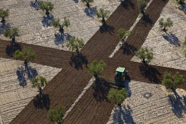 HMS0391381 Spain, Community of Madrid, Villaconejos, olive groves (aerial view)