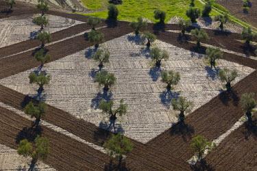 HMS0391383 Spain, Community of Madrid, Villaconejos, olive groves (aerial view)