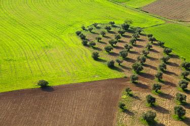 HMS0391447 Spain, Community of Madrid, Chinchon, crops (aerial view)