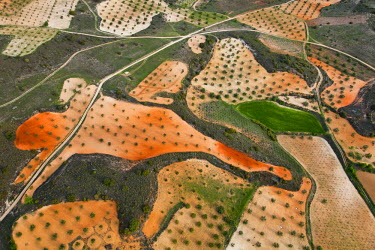 HMS0391457 Spain, Community of Madrid, Chinchon, olive groves forming geometric designs (aerial view)