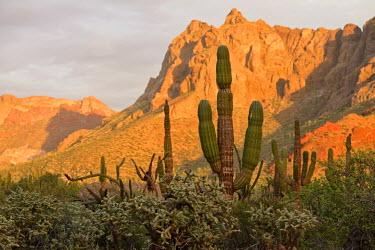 MEX1454AW Desert outside of La Paz,Baja California, Mexico