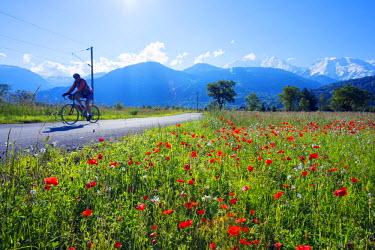 FRA8305 Europe, France, Haute Savoie, Rhone Alps, Poppy field