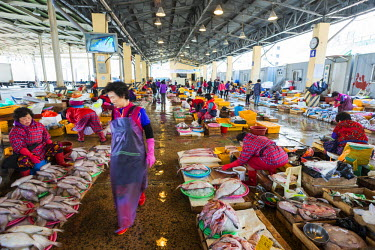 SKO0157 Asia, Republic of Korea, South Korea, Busan, Jagalchi fish market
