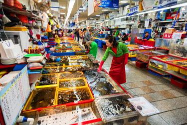 SKO0158 Asia, Republic of Korea, South Korea, Busan, Jagalchi fish market