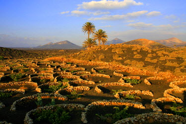 HMS0200497 Spain, Canary Islands, Lanzarote Island, Biosphere reserve, vineyards near Yaiza