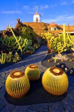 HMS0202955 Spain, Canary Islands, Lanzarote Island, Guatiza, the Cactus garden by Cesar Manrique