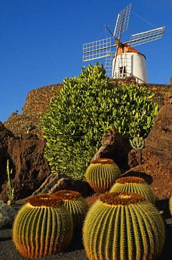HMS0210513 Spain, Canary Islands, Lanzarote Island, Guatiza, the Cactus garden by Cesar Manrique