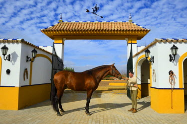 HMS1718797 Spain, Andalusia, Seville Province, Utrera, the Ayala stud farm (Yeguada Ayala), Andalusian horse also known as the Pure Spanish Horse (Pura Raza Espanola)