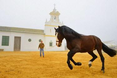 HMS1718817 Spain, Andalusia, Seville Province, Utrera, the Ayala stud farm (Yeguada Ayala), Andalusian horse also known as the Pure Spanish Horse (Pura Raza Espanola)