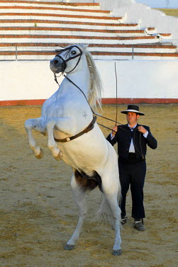 HMS0894933 Spain, Andalucia, Guillena Cortijo Aguila Real, a demonstration of dressage of an Andalucian horse