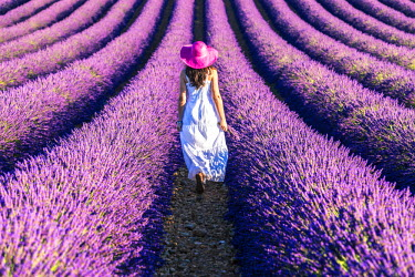 FRA8381AW France, Provence Alps Cote d'Azur, Haute Provence, Plateau of Valensole. Woman with white dress in lavender field (MR)