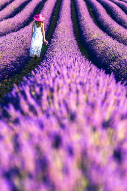 FRA8382AW France, Provence Alps Cote d'Azur, Haute Provence, Plateau of Valensole. Woman with white dress in lavender field (MR)