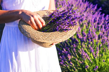 FRA8385AW France, Provence Alps Cote d'Azur, Haute Provence, Plateau of Valensole. Close up of woman holding hat with lavender flowers (MR)
