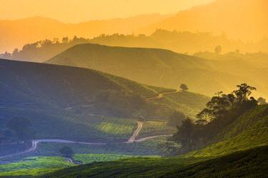 MY02175 Malaysia, Pahang, Cameron Highlands, Brinchang, Tea Plantation
