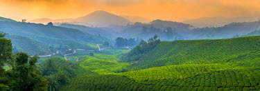 MY02179 Malaysia, Pahang, Cameron Highlands, Brinchang, Tea Plantation