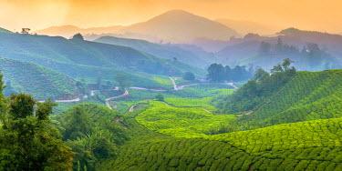 MY02180 Malaysia, Pahang, Cameron Highlands, Brinchang, Tea Plantation