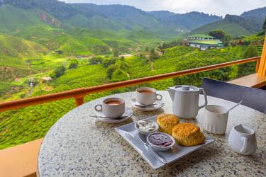 MY02187 Malaysia, Pahang, Cameron Highlands, Tanah Rata, Cameron Valley Tea Estate, Cameron Valley Tea House, Afternoon Tea with tea and scones