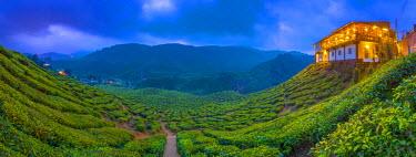 MY02194 Malaysia, Pahang, Cameron Highlands, Tanah Rata, Cameron Valley Tea Estate, Cafe Restaurant