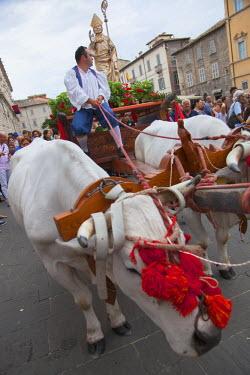 ITA3325AW Procession of St Emygdius in Piazza Arringo, Ascoli Piceno, Le Marche, Italy