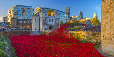 UK10875 England, London, Tower of London, Blood Swept Lands and Seas of Red by ceramic artist Paul Cummins, with setting by stage designer Tom Piper, 888,246 ceramic poppies marking one hundred years since th...
