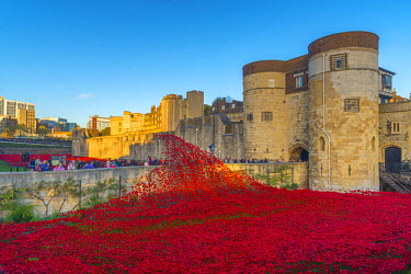 UK10876 England, London, Tower of London, Blood Swept Lands and Seas of Red by ceramic artist Paul Cummins, with setting by stage designer Tom Piper, 888,246 ceramic poppies marking one hundred years since th...