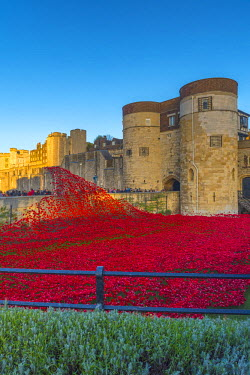 UK10877 England, London, Tower of London, Blood Swept Lands and Seas of Red by ceramic artist Paul Cummins, with setting by stage designer Tom Piper, 888,246 ceramic poppies marking one hundred years since th...