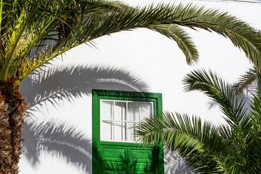SPA6160AW Palm tree and green window, Lanzarote, Canary Islands, Spain