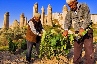 HMS0192272 Turkey, Central Anatolia, Cappadocia, listed as World Heritage by UNESCO, near Uchisar village, Mehmet Sisman and Mehmet Bektas work in the fields of Asiklar Vadisi (Asiklar Valley)