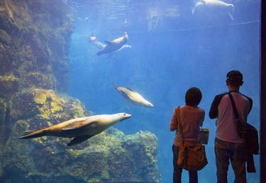 JAP0706AW Couple watching seals at Osaka Aquarium, Tempozan, Osaka, Kansai, Japan