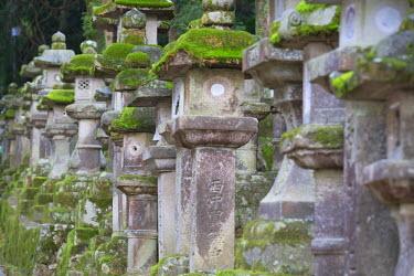 JAP0742AW Stone lanterns at Kasuga Taisha Shrine (UNESCO World Heritage Site) at dusk, Nara, Kansai, Japan