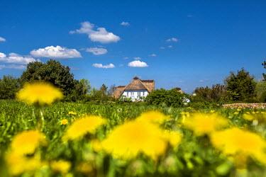 GER8271AW Thatched house, Nebel, Amrum Island, Northern Frisia, Schleswig-Holstein, Germany