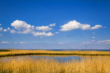 GER8272AW Salt marsh, Amrum Island, Northern Frisia, Schleswig-Holstein, Germany