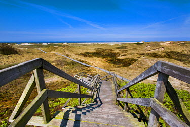 GER8278AW Wodden path in the dunes, Amrum Island, Northern Frisia, Schleswig-Holstein, Germany