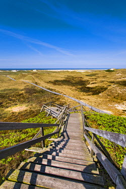 GER8279AW Wodden path in the dunes, Amrum Island, Northern Frisia, Schleswig-Holstein, Germany