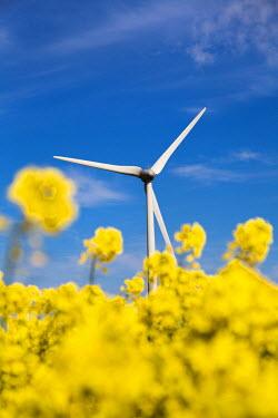 GER8315AW Wind turbine in rape field, Nordstrand island, Northern Frisia, Schleswig-Holstein, Germany
