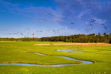 GER8256AW Salt marsh and lightroom, Amrum Island, Northern Frisia, Schleswig-Holstein, Germany