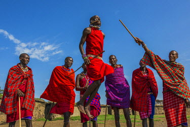 KEN9130AW Africa, Kenya, Narok County, Masai Mara. Masai men dancing at their homestead.